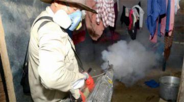 Reportan epidemia de dengue en el trópico de Cochabamba