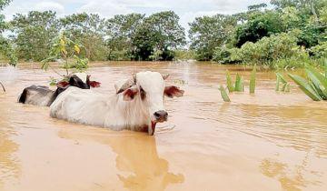 Alerta roja por crecida del río Mamoré