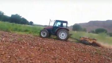 Alarma en los Cintis: Prefieren enterrar la cebolla por su bajo costo y la sobreproducción