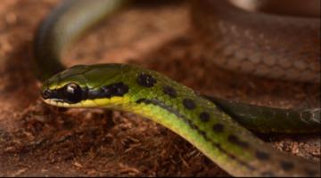 La Paz: Descubren 20 nuevas especies en el valle de Zongo que maravillan a científicos