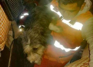 Rescatan a un perro atascado en una caseta del mercado Campesino
