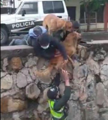 Video viral: Policías rescatan a un perro de un canal de agua en Cochabamba