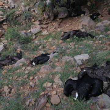 Reportan más animales muertos en presunto envenenamiento de cóndores