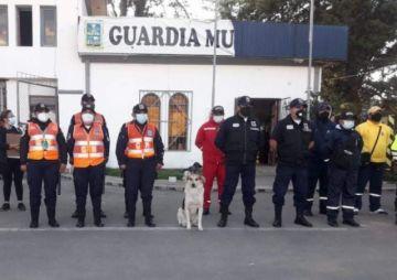"""""""Choco"""", el fiel amigo que acompaña a la Guardia Municipal en sus operativos"""
