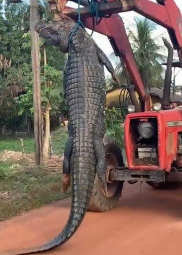 Matan a un caimán negro en Beni; anuncian investigación y sanción