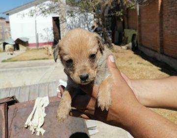 Una veintena de canes esperan ser adoptados en Zoonosis este domingo