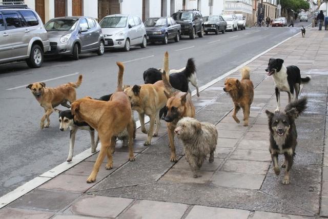 Aumenta abandono de mascotas en la Capital