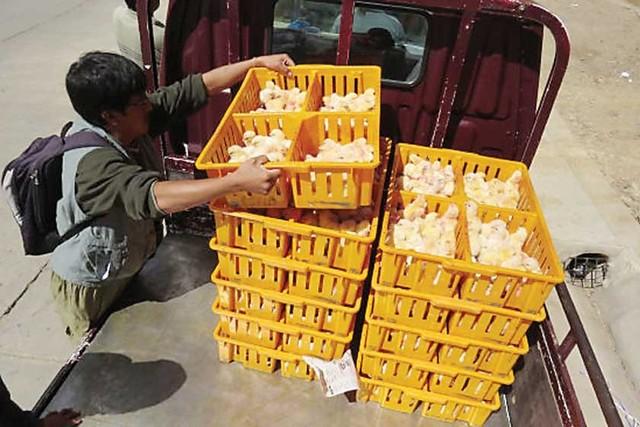 Pollo: Consumo de La Paz duplica el de Santa Cruz