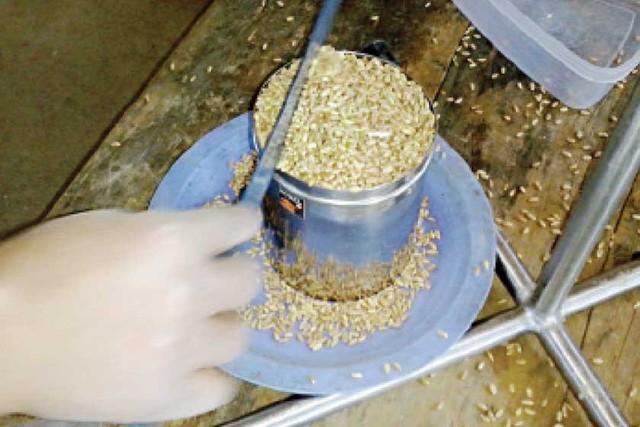 Producción alta de trigo desfavorecida por precio