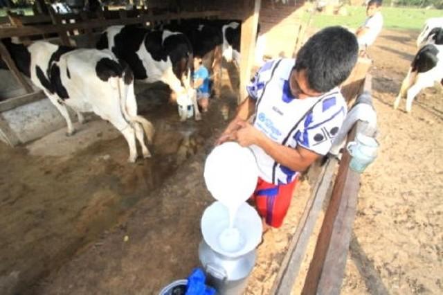 Productores de leche elaboran un queso de 250 kilos en la Amazonía boliviana