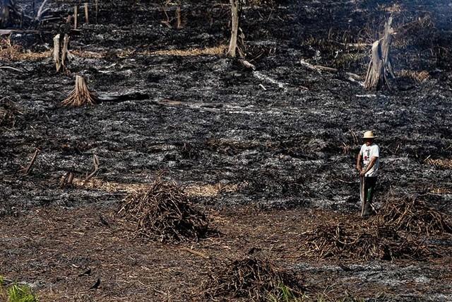 Una triste postal de la Amazonía brasileña