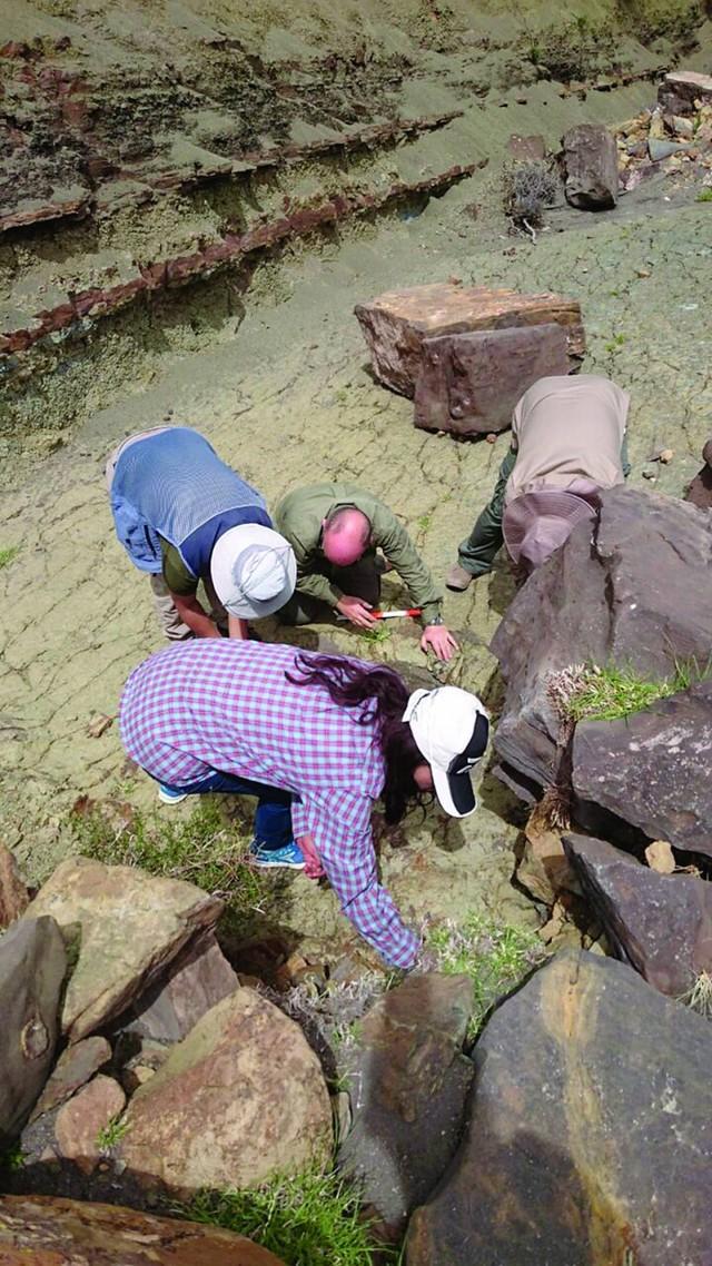 Gran cantidad de fósiles de moluscos en la región