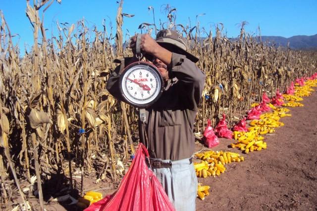 Cinco proyectos benefician a la producción agropecuaria de 29 municipios