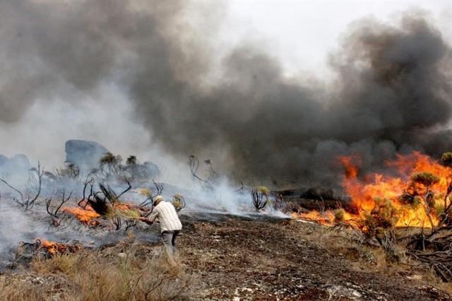 Aumenta a 36 el número de muertos en los incendios de Portugal