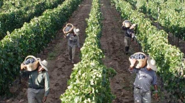 Catadores consideran al vino boliviano uno de los mejores del mundo