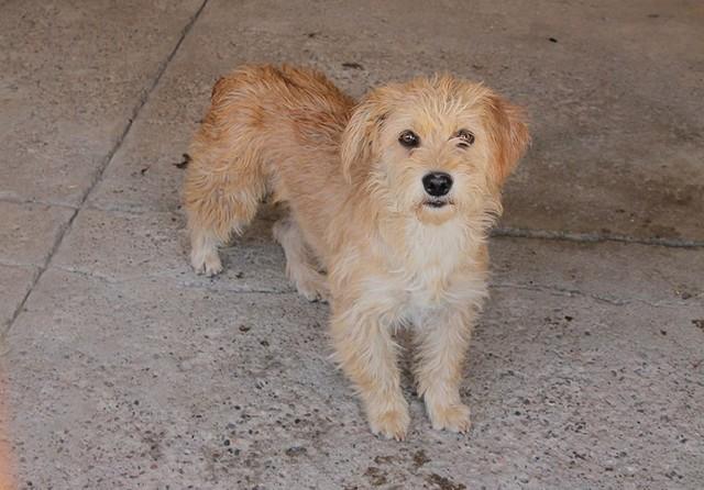 Zoonosis asegura que no usó una perra para atraer y capturar canes
