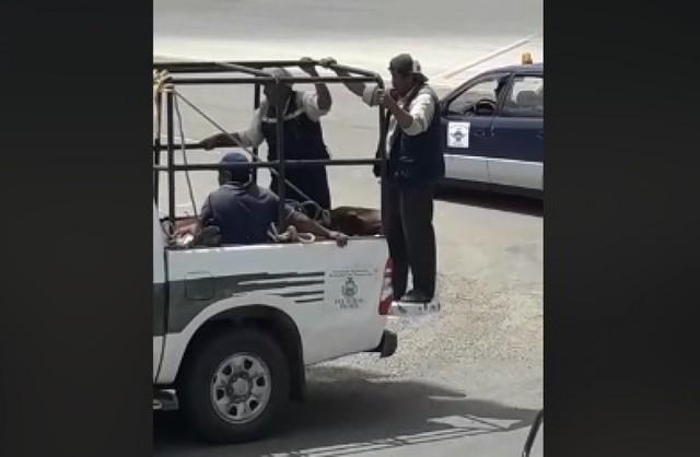 Toro ingresa al aeropuerto Alcantarí y ataca a un pasajero