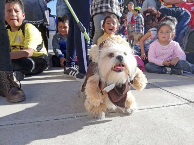 Apuntan a ley de registro de canes