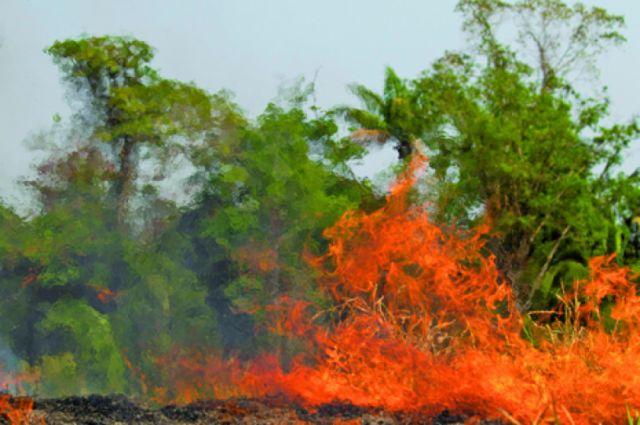 Bolsonaro reacciona y desplaza militares a combatir incendios