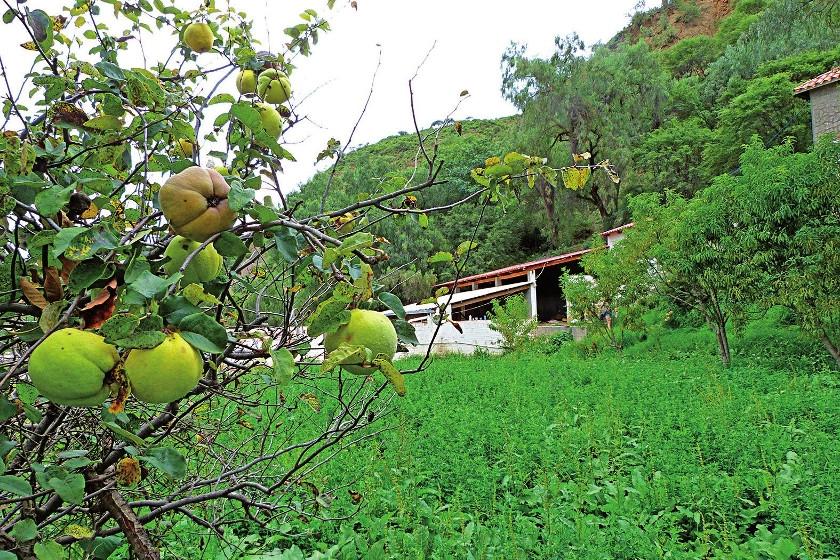 Vista parcial de la huerta con árboles frutales, sembradíos de alfa y al fondo el establo.