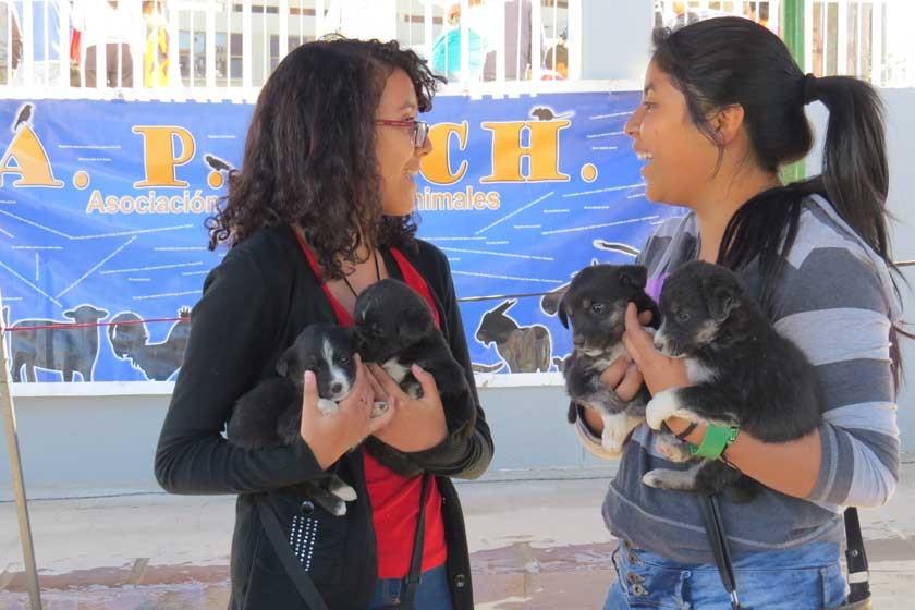 Mascotas aguardan adopción