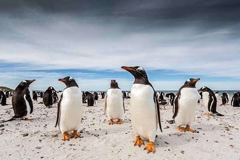 """""""Pingüinos"""""""