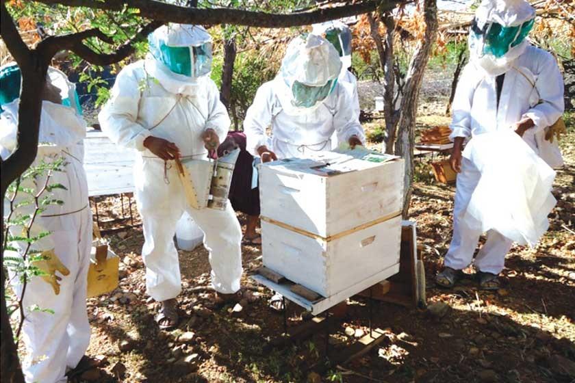 La Municipalidad dotó de equipos y capacitó a los apicultores de los distritos rurales.