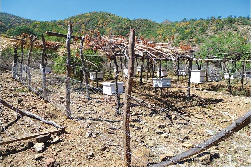 INCIDENCIA. La crianza de abejas es una actividad que promueve la conservación de bosques, generando recursos económicos