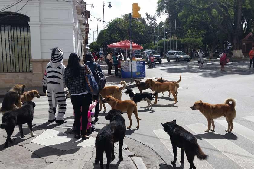 Canes callejeros, sin solución