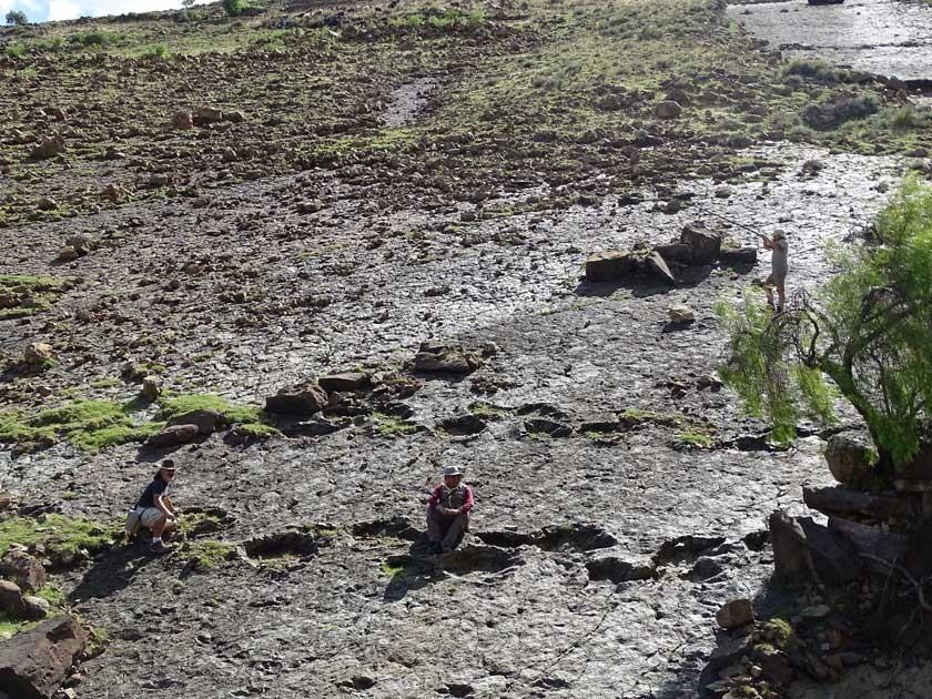Sucre desvela más tesoros paleontológicos