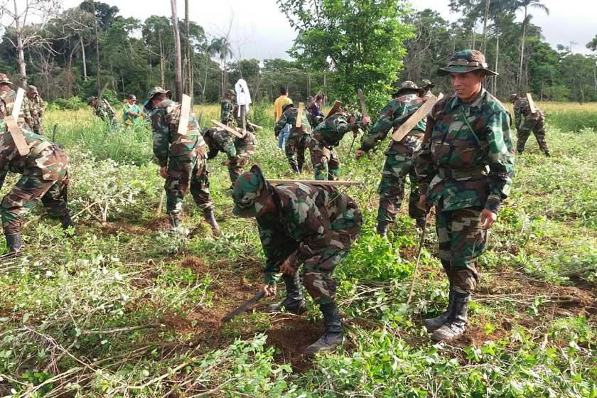 Se  reduce la meta de erradicación de coca