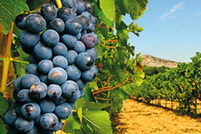 Ruta del vino y las haciendas La ruta del Sol y del vino