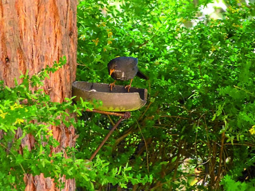 Una de las chulupías que viven en los árboles del Bramadero