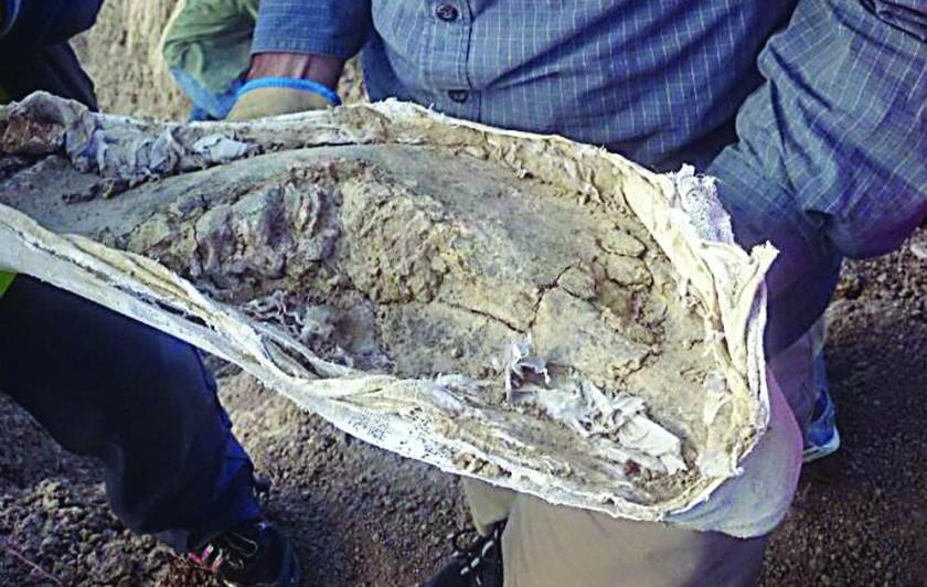 Chuquisaca fue el refugio de especies de la Era del Hielo