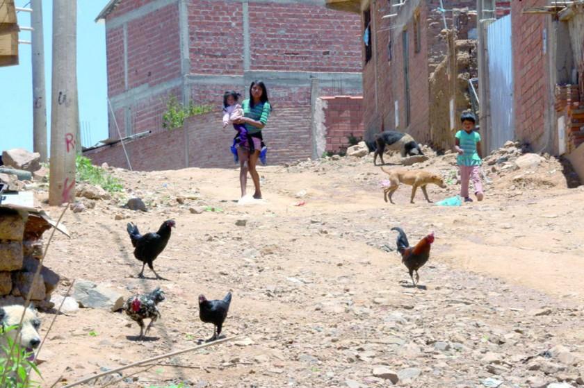 RIESGO. La presencia de animales domésticos en la zona crea un foco de insalubridad.