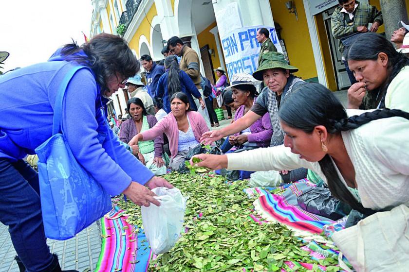 Ley de la coca: Se reaviva polémica