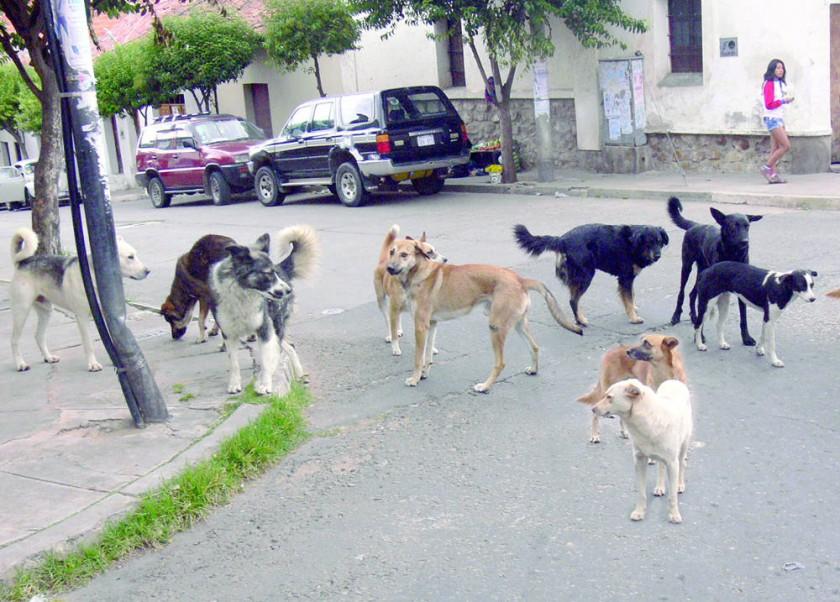 Un caso de rabia canina en Poroma activa vigilancia