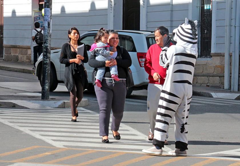 Cebras, nuevamente en las calles