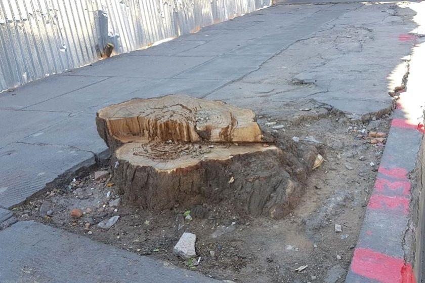Así quedaron los árboles. Foto: CORREO DEL SUR