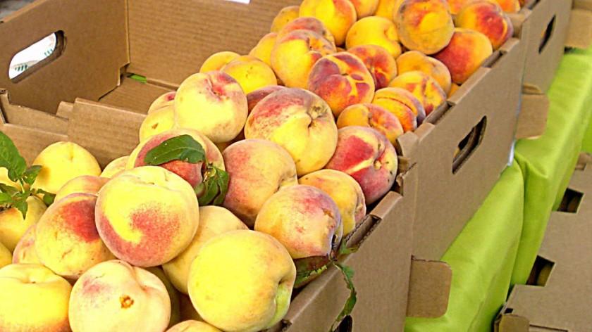 San Lucas tiene un gran potencial en la producción de estas frutas. cedida