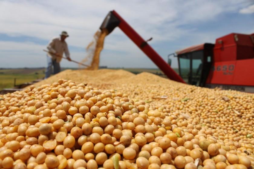 La soya acapara gran parte de la producción agrícola en nuestro país; pero no sirve para la alimentación humana.