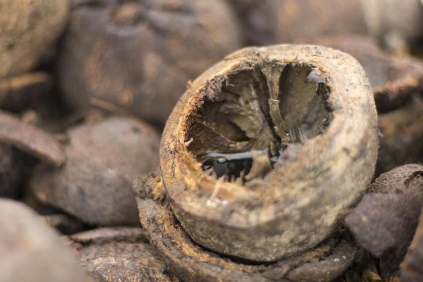 Fruto del árbol de la castaña en cuyo interior se encuentran las almendras que se transportan para su procesamiento.