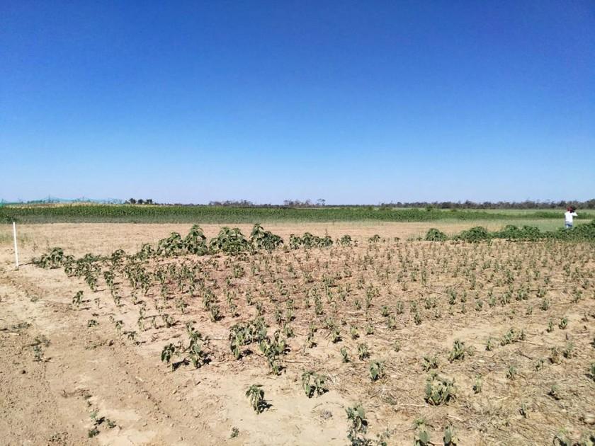 los efectos de la sequía en el CEA 2.