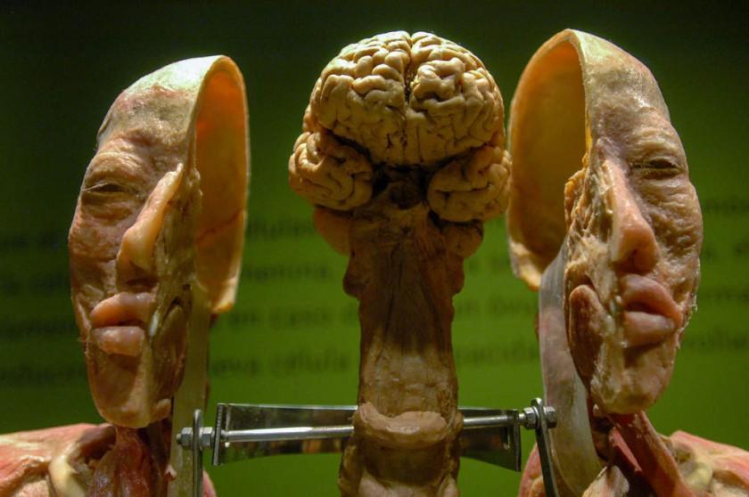 Representación del cerebro humano, en el que se pueden observar las diferentes áreas involucradas en las emociones.
