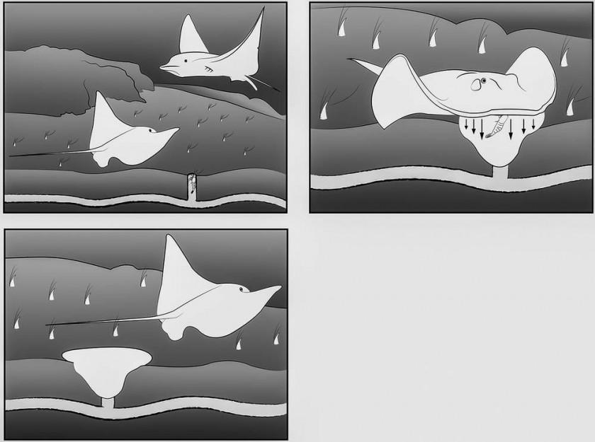 Estructuras estudiadas en relación con el icnogénero 'Piscichnus'.
