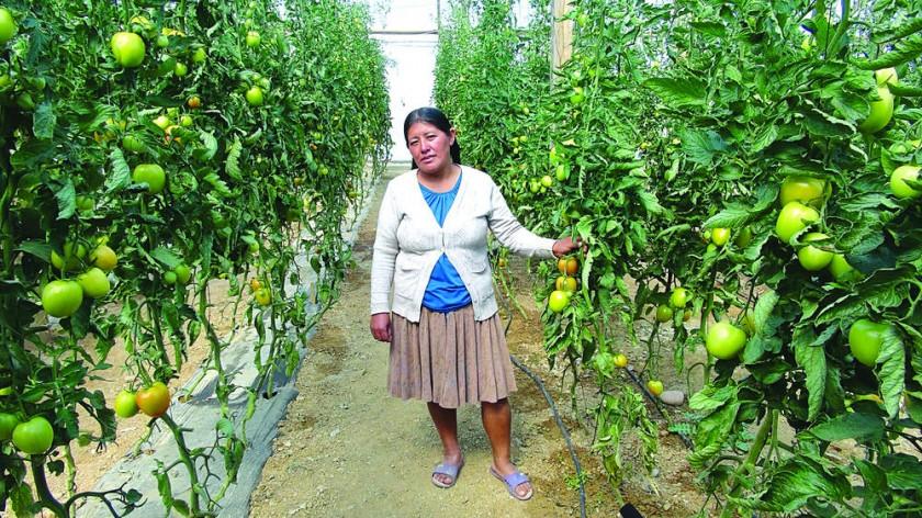 La tecnología llega a los cultivos