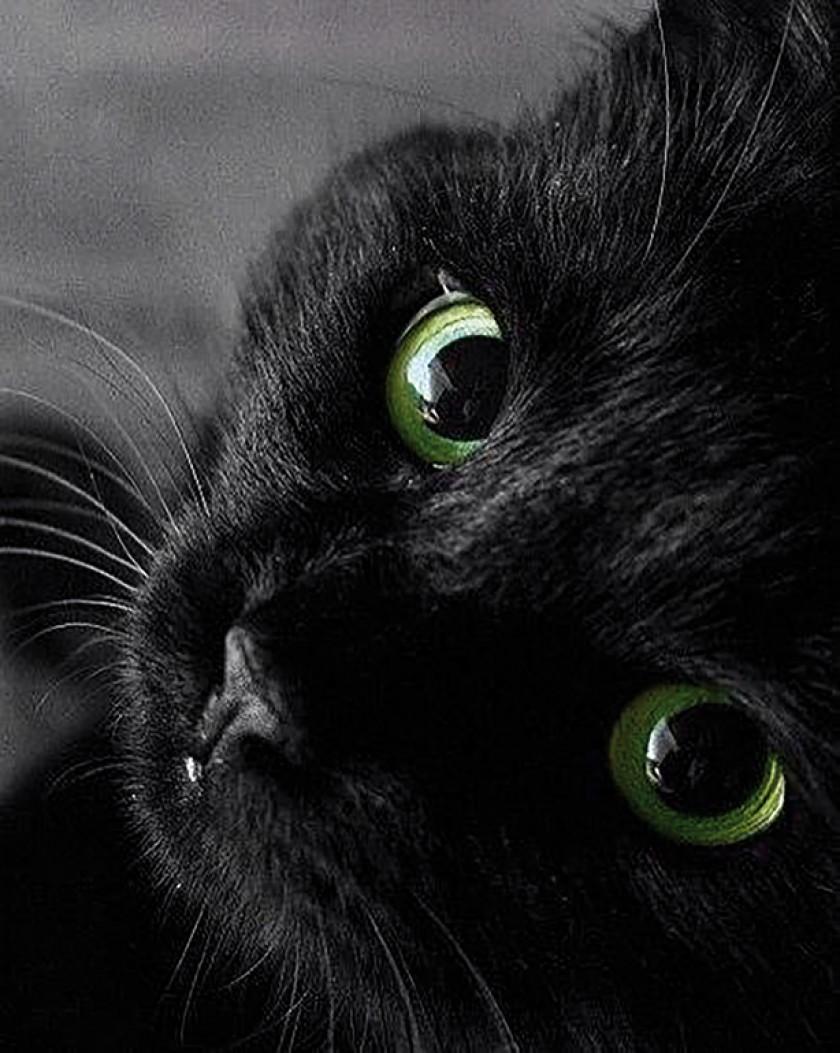 9 mitos y 1 verdad sobre los gatos