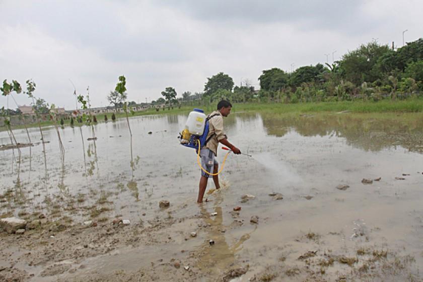 Un empleado de los servicios de limpieza rocía con insecticida para evitar una plaga de mosquitos en Nueva Delhi (India)