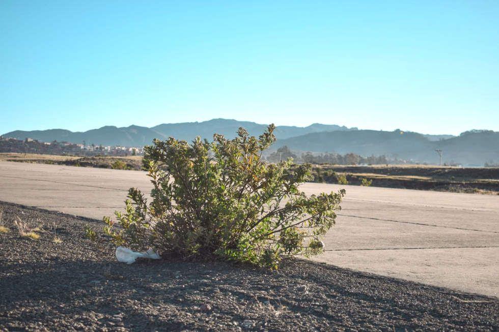 Crecieron arbustos al borde de la pista y desaparecieron los indicadores visuales.
