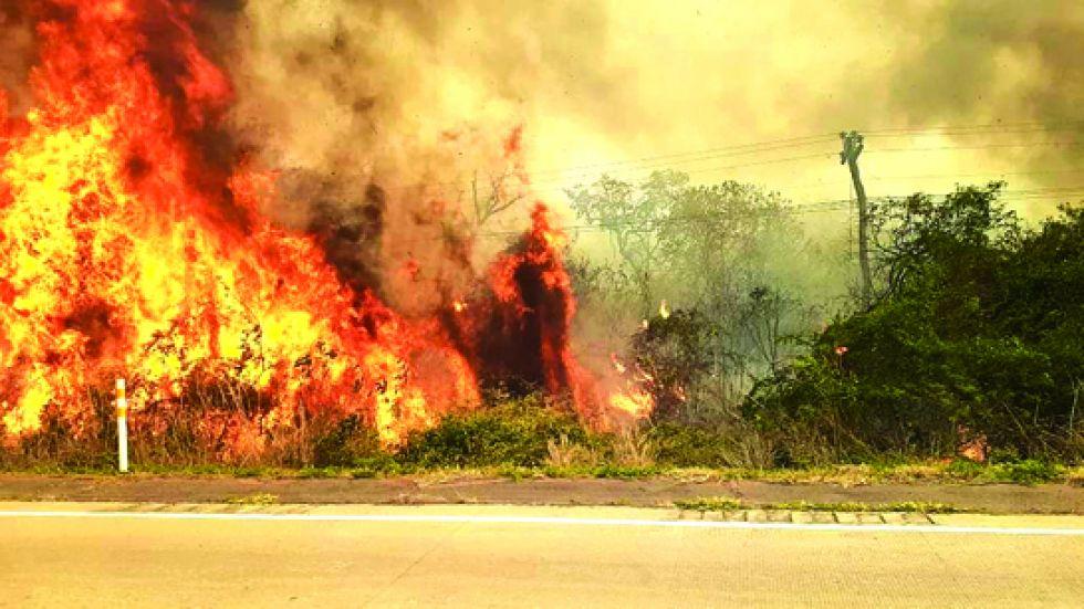 Santa Cruz: Incendios obligan a unir fuerzas